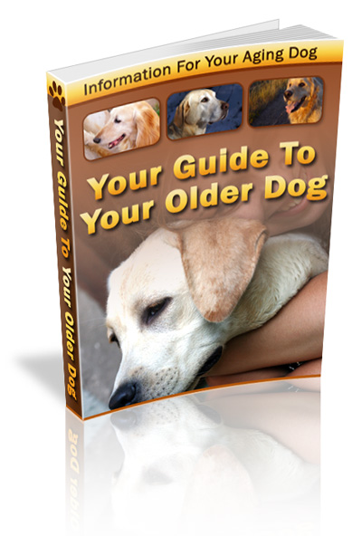 Your Guide to Your Older Dog